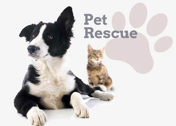 Pet Sanctuary Business Website